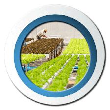 cat-hydroponics-aquaponics-